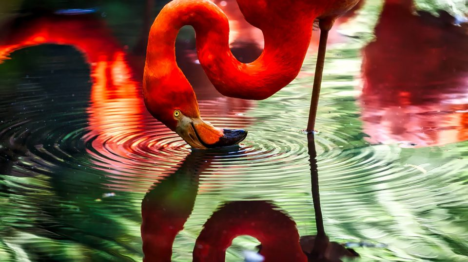 Das Flamingo steht auf einem Bein
