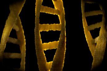 Beim Vaterschaftstest wird die DNA untersucht