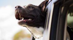 Der Urlaub mit Hund kann zu einem tollen Erlebnis werden