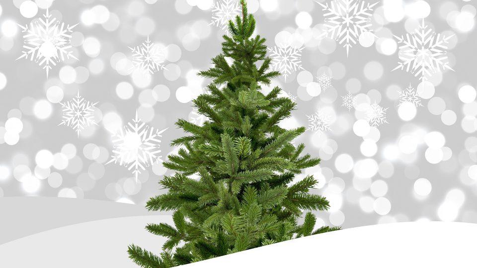 Der Weihnachtsbaum Preis hat sich kaum verändert