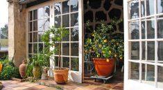 Die Auswahl an Pflanzen für den Wintergarten ist enorm groß