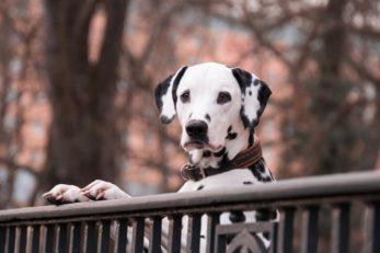 In dieser Stadt sind Hunde und Hundebesitzer besonders willkommen
