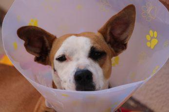 Wir klären ob eine Tierkrankenversicherung Sinn macht oder nicht.