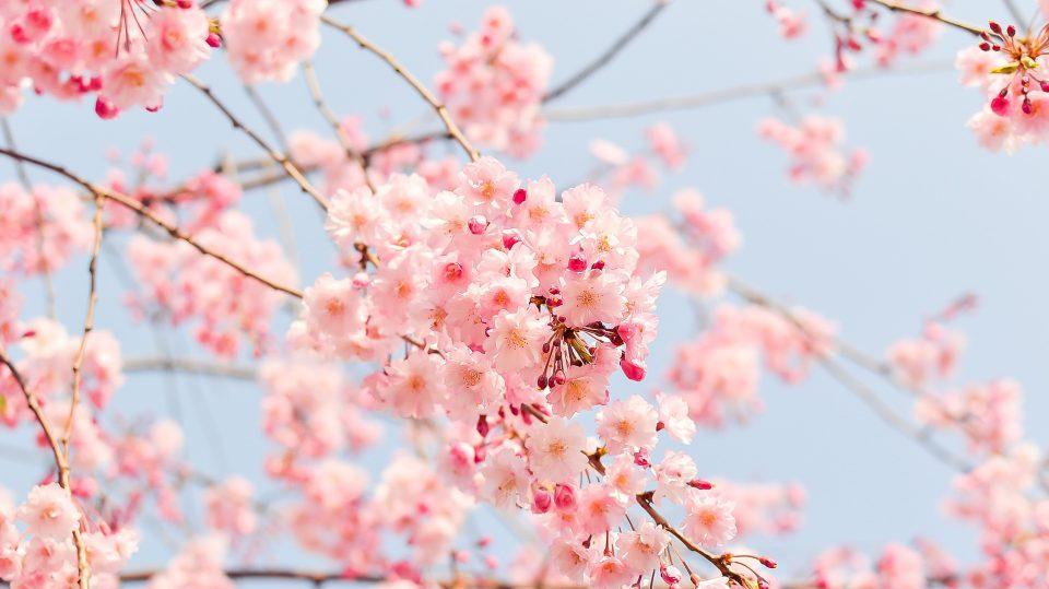 Frühlingsmode ganz im Stile der japanischen Kirchblüten ist derzeit im Trend