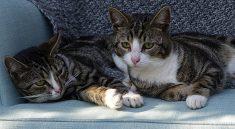 Mit der Anschaffung eines Haustiers gehen auch viele Pflichten einher