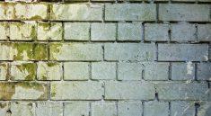 Spätestens wenn die Wände mit Schimmel befallen sind, sollte man für die Trockenlegung des Kellers sorgen