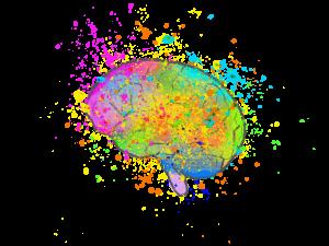 Allgemeinwissen verankert sich in unserem Gehirn