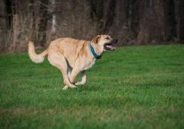 Agility hält die Hunde fit