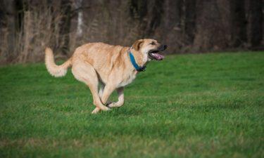 Agility für Hunde – was ist das?