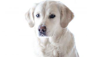 Mit der Hundeerziehung bekommt man das Verhalten des Vierbeiners in den Griff