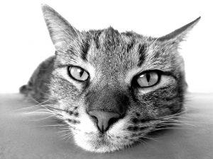 Auch Katzen müssen richtig erzogen werden