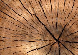 Über die Faszination am Werkstoff Holz