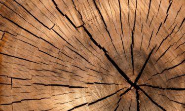 Werkstoff Holz – Warum ist Holz so vielseitig?