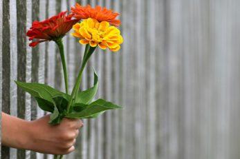 Blumen als Valentinsgeschenke für Ihn