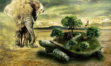 Welche Tiere leben am längsten?